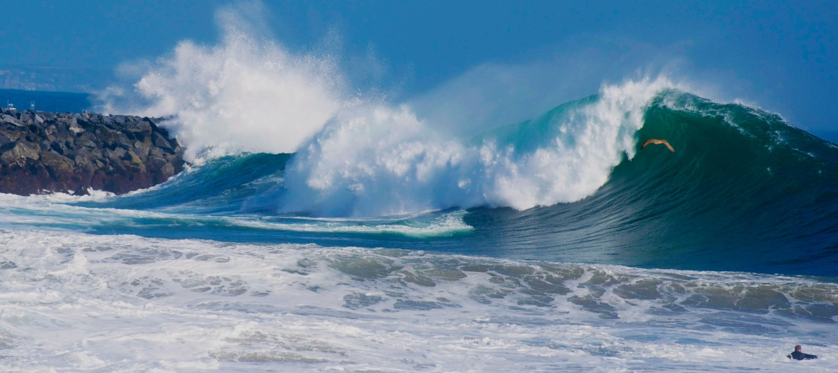 Big Swell at the Wedge